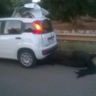 Muore investito  da un auto ad Ostuni un cavallo,2 feriti