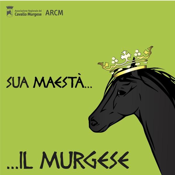 Cavallo murgese copertina instagram