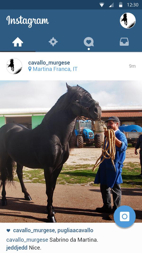 Instagram Murgese