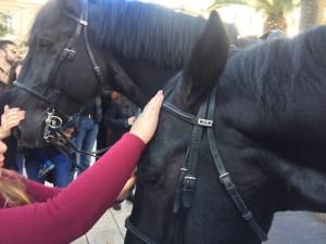 Duttilità del cavallo Murgese - Foto Puglia a cavallo