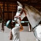 PROPRIETARI E AFFIDATARI: la Regione Puglia fa centro sugli sport equestri