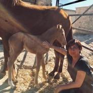FURTI DI CAVALLI, NE PARLIAMO  CON HORSE ANGELS